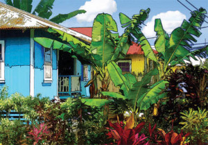 Colorful Shacks, Hamakua - Catherine Lee Neifing